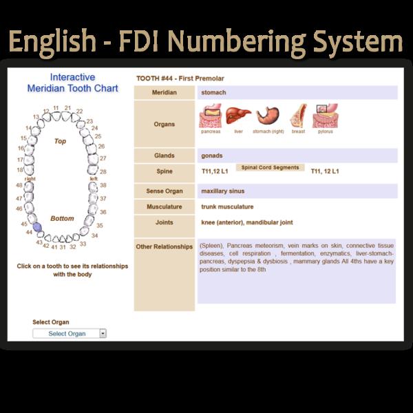Order English FDI Meridian Tooth Chart