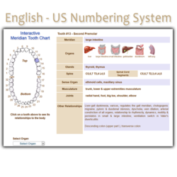 Order English US Numbering System