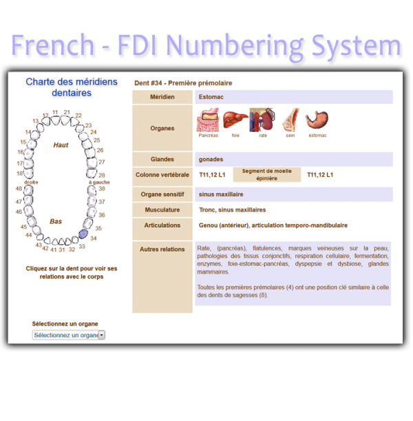 Order French FDI Meridian Tooth Chart