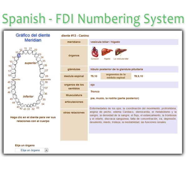 Order Spanish FDI Meridian Tooth Chart