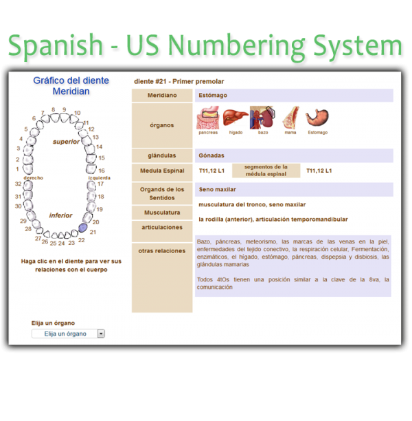 Order Spanish US Meridian Tooth Chart